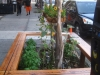 Tree Pit Bench in front of Darna Falafel